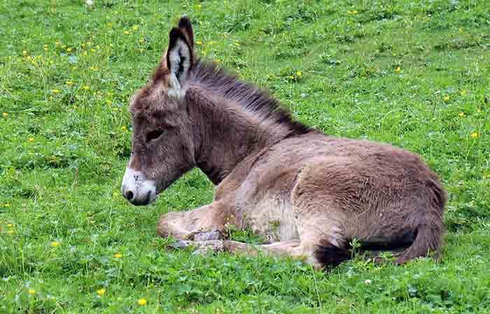 Cute Baby donkey names
