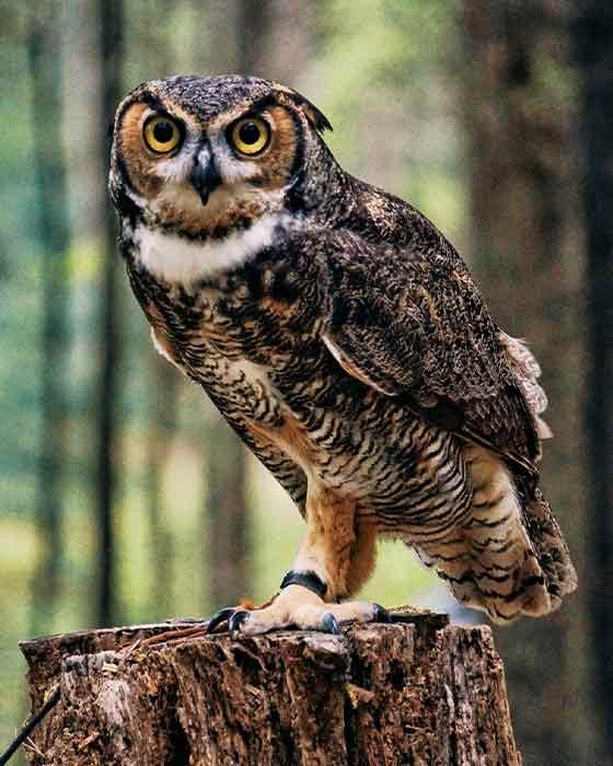 Pet Male Owl Names