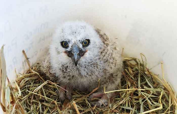 Baby Owl Name