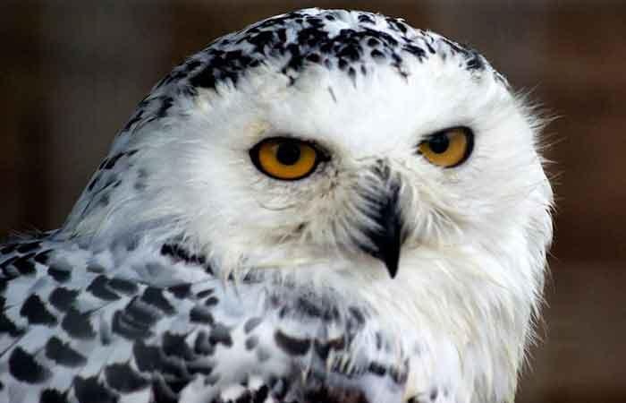 Harry Potter Owl Names