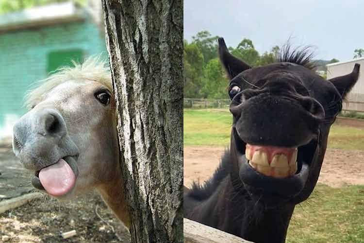 punny and funny horse pictures
