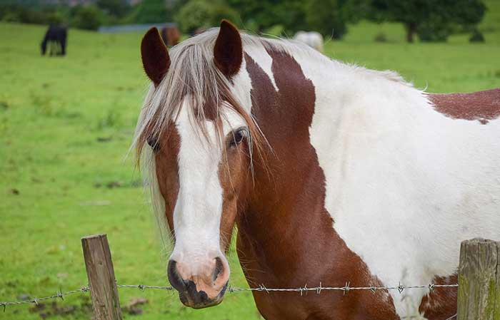 Brown and white horse names