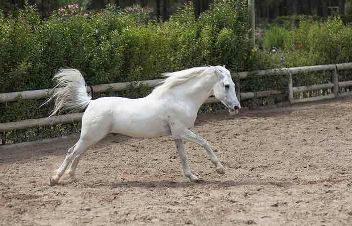white male horse name Ideas