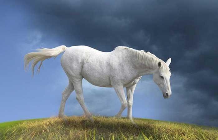 Horse with white coat