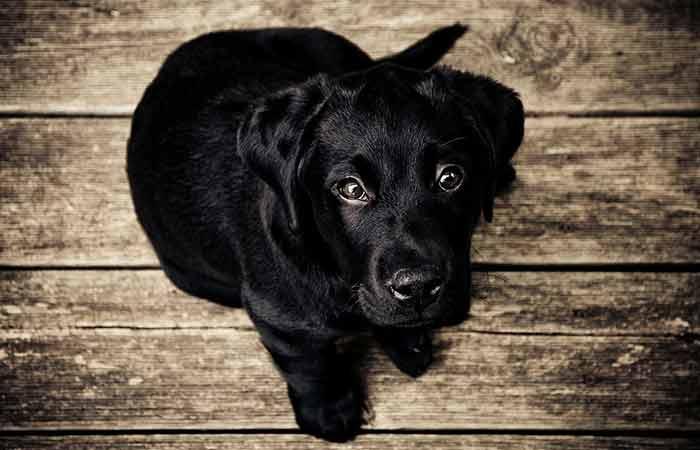 Cute black puppy gender neutral names
