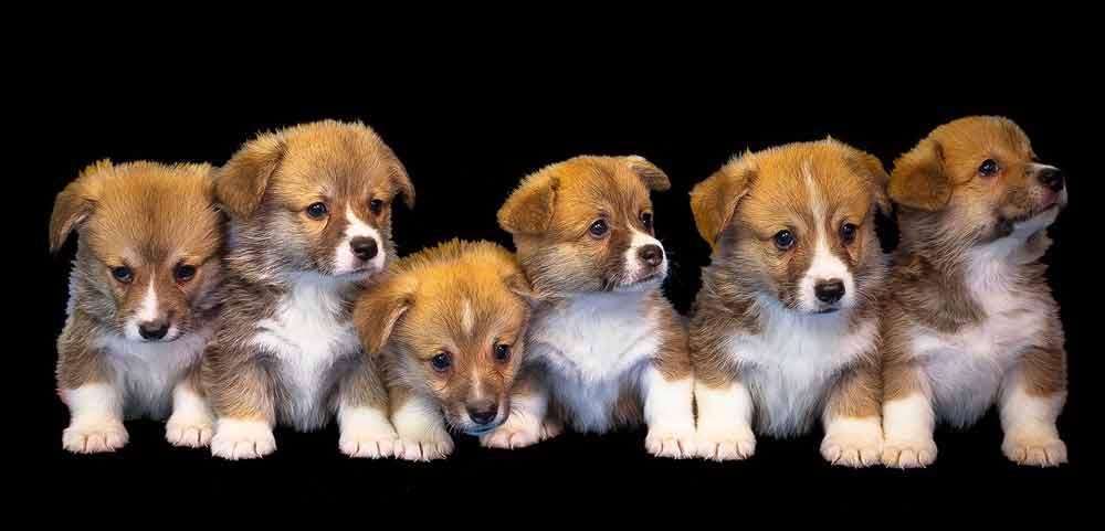 Puppies Photo