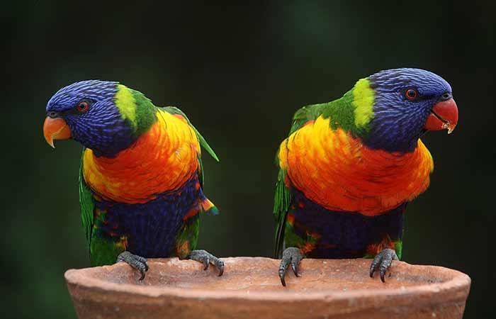 Neutral Parrot names