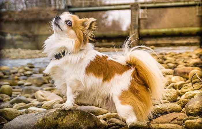 Cute and unique C dog names