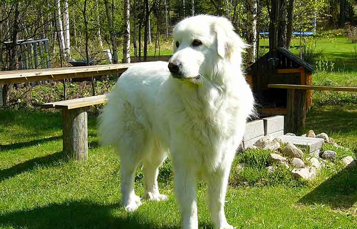 Bear names are great huge dog breeds