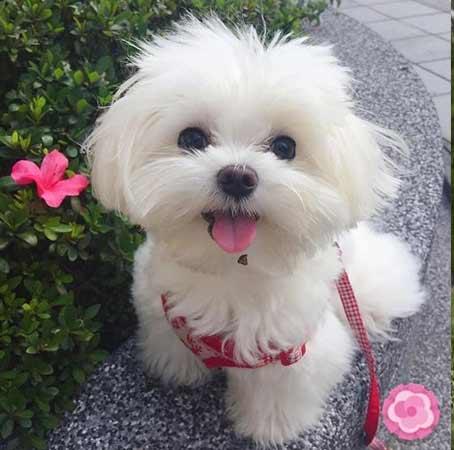 Cute girly Dog