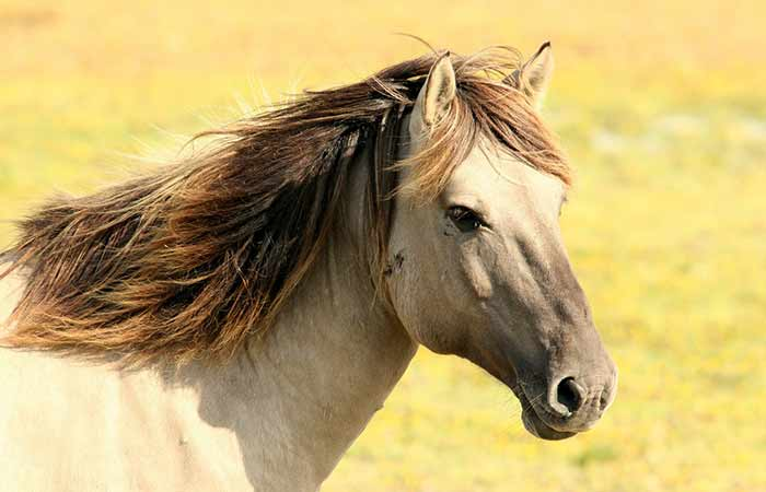 Horse names that start with letter A-male and female
