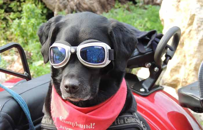 Cool Dog in Glasses