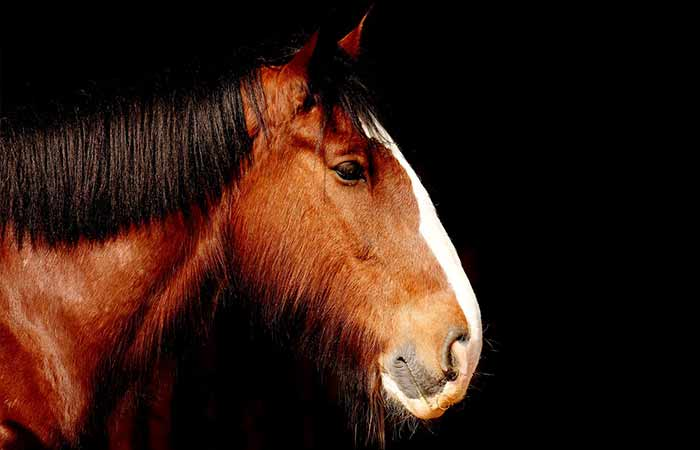 Horse Names that begin with E