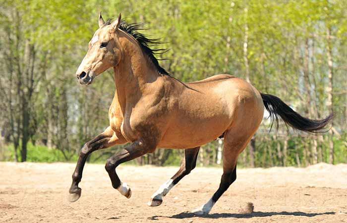 N horse Names