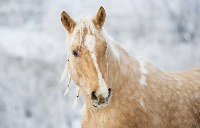 Male and female horse names that start with F