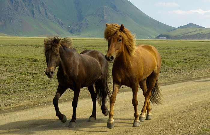 Horse names that begin with M