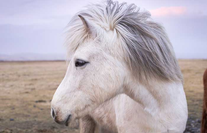 Horse names that start with letter O