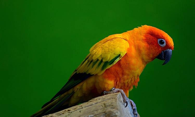 Cute parakeet names