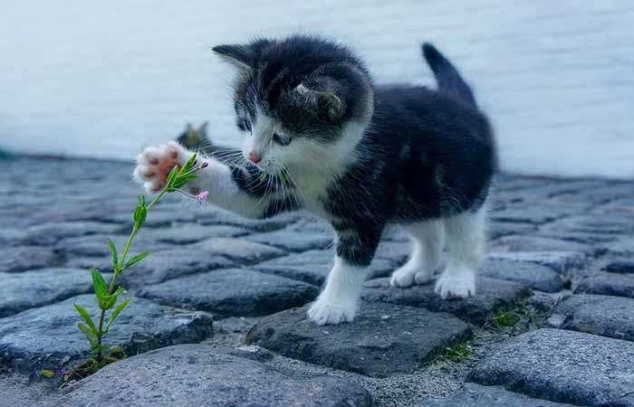 Flower Pet Names-A-z