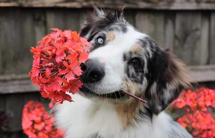 A dog with flowers