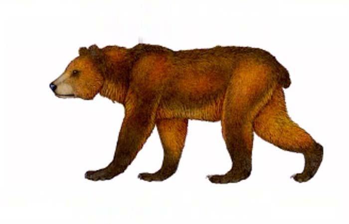Bear types Names