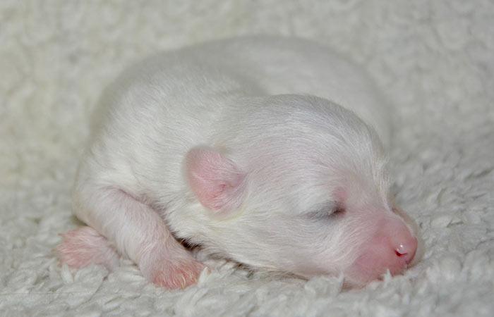 Cute New Born Puppy