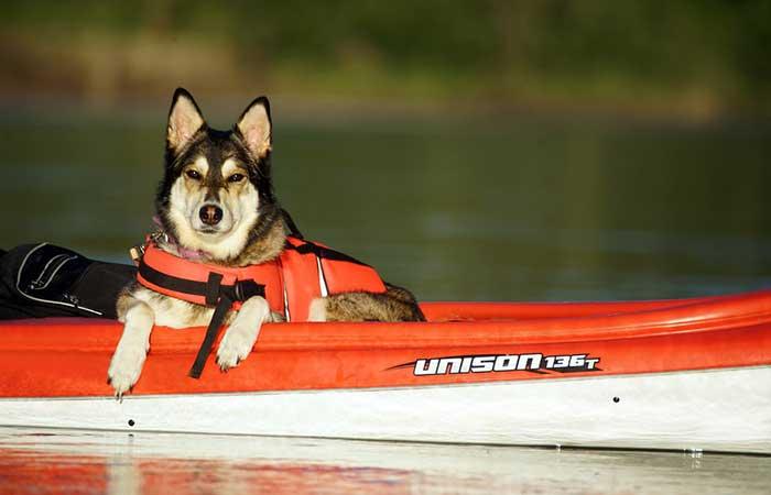 Boating Dog Names
