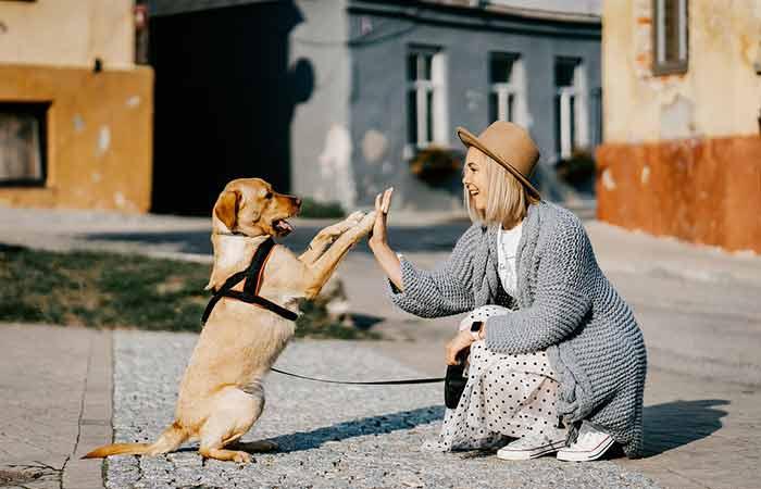 Playful and cheerful Dog