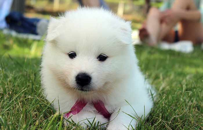 Dog Breeds that look like a bear