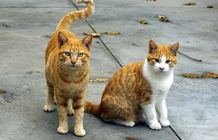 Female and Male Cats