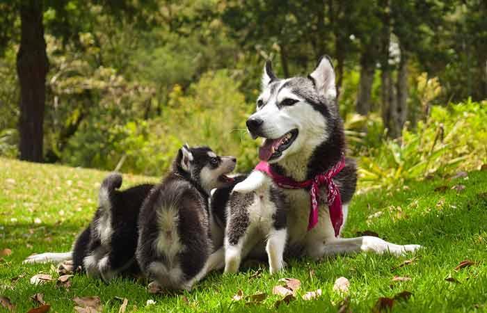 Mother Dog Feeding Puppies