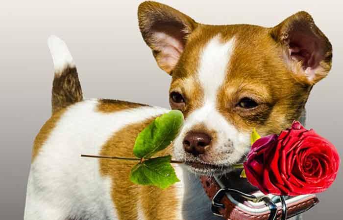 Valentine Day inspired Dog Names